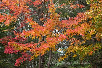 Fall Woods V, Acadia