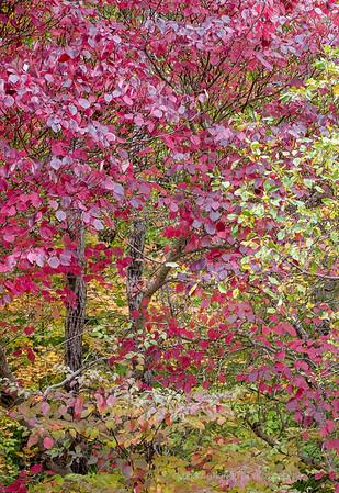 Acadia Fall No 10