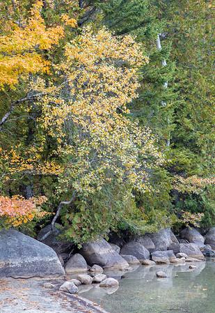 Acadia Fall No 11