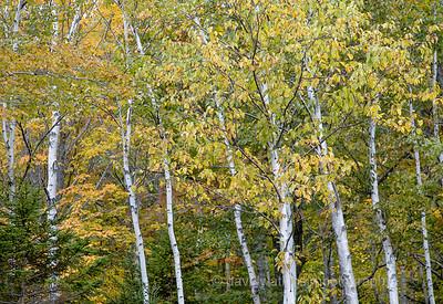Acadia Fall No 6