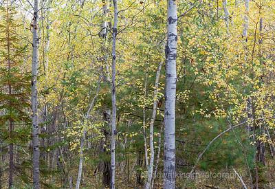 Acadia Fall No 3