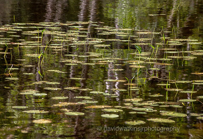 Reflections on New Growth copy