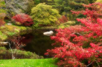 Asticou Azalea Garden, Acadia National Park