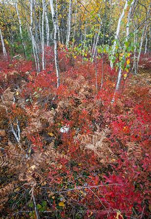 Acadia Fall No 14