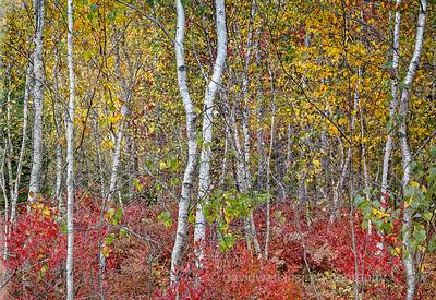 Acadia Fall No 13