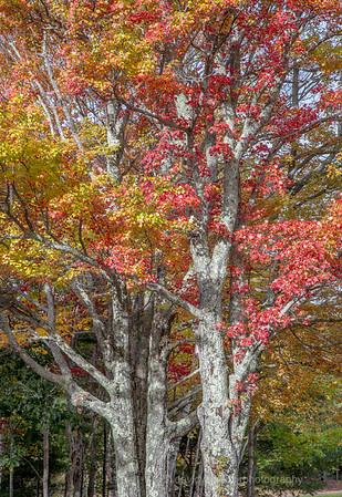 Acadia Fall No 2