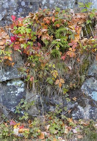 Acadia Fall No 7