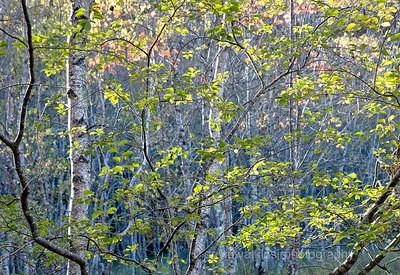 Dawn-Wild Gardens of Acadia