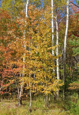 Fall Woods,Acadia