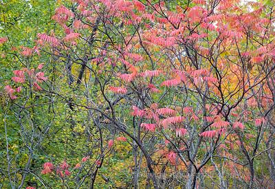 Acadia Fall No 16