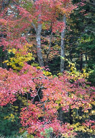 Fall Woods III, Acadia