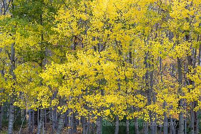 Fall Woods VIII, Acadia