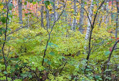 Acadia Fall No 17
