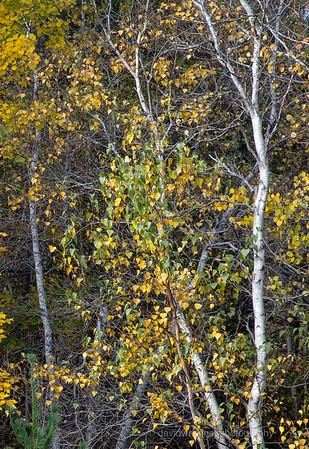 Acadia Fall No 19