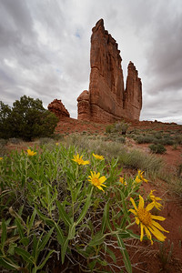Mule's Ears and The Organ