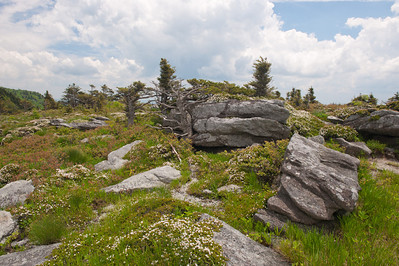 Vegetation and rocks on Linville Peak, Grandfather Mountain, NC