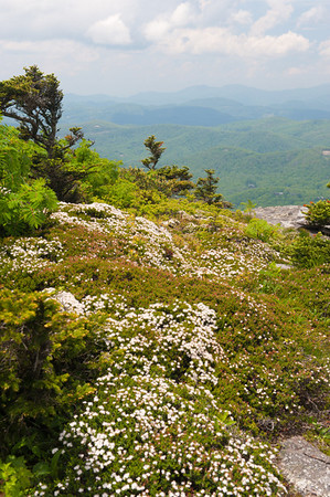 View from Linville Peak, Grandfather Mountain, NC