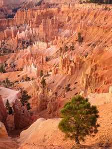 Bryce Amphitheater from Sunrise Point, Bryce Canyon National Park