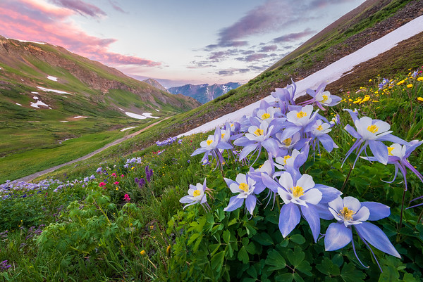 Colorado Wildflowers and Waterfalls 2019