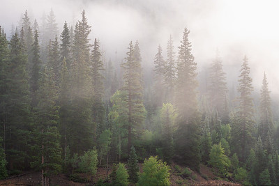 Fog in the Pines