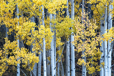 Aspens at Crystal Lake