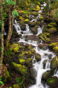 Cascade on Wild Cherry Branch, Great Smoky Mountains National Park