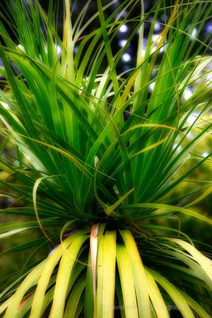 Kula Gardens, Maui, No.6