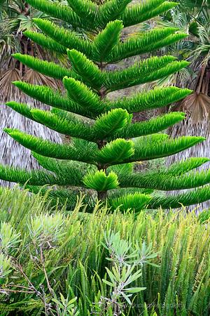 Kula Gardens, Maui, No.5