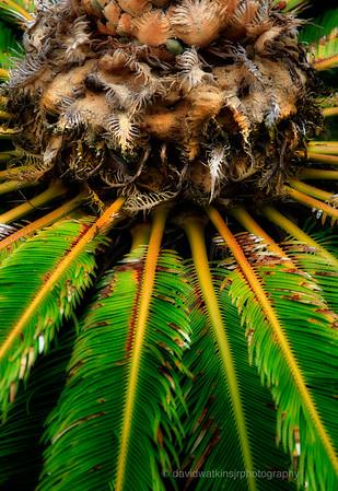 Kula Gardens, Maui, No.7