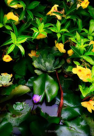 Kula Gardens, Maui, No.9