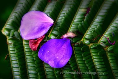 Kula Gardens, Maui, No.2