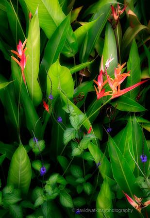 Kula Gardens, Maui, No.8