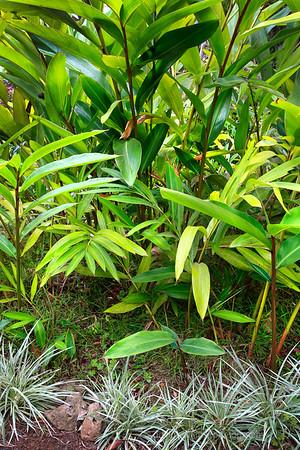 Kula Gardens, Maui, No.3