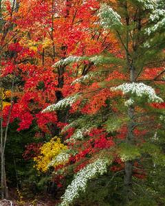 Trees along Boyscout Rd 616