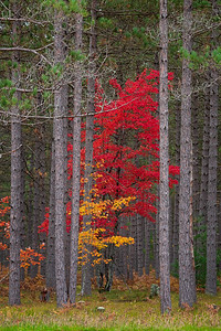 Hiawatha National Forest, Michigan U.P.