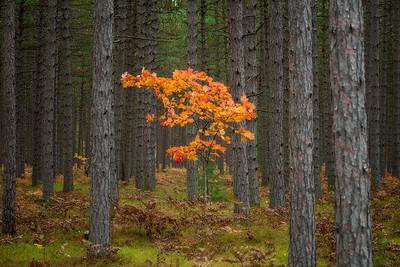Hiawatha National Forest, Michigan U.P.