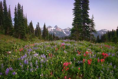Wildflowers and the Tatoosh Range