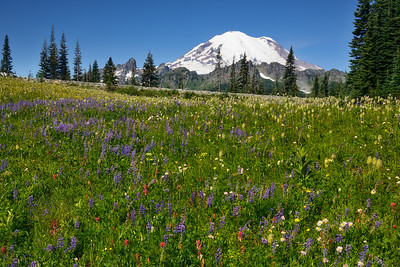 Wildflowers and Mount Rainier from Tipsoo Lake, Mount Rainier National Park