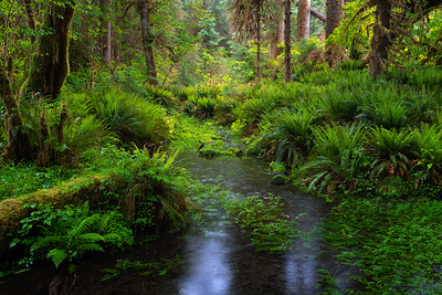 Hoh Rain Forest, Spruce Nature Trail