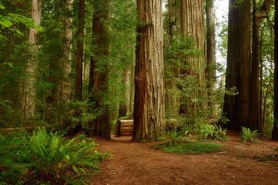 Mill Creek Trail, Jedediah Smith Redwoods State Park