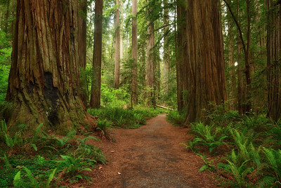 Mill Creek Trail, Jedediah Smith Redwoods State Park