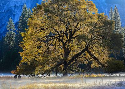 Sunrise, Cook's Meadow, Yosemite