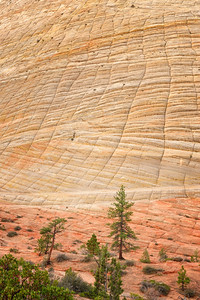 Checkerboard Mesa, Zion National Park