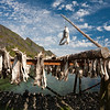"A ""scare-gull""  protecting drying cod. Moskenes, Lofoten."