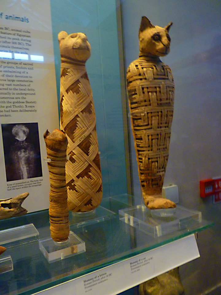 1st century cat mummies! And a kitten mummy!