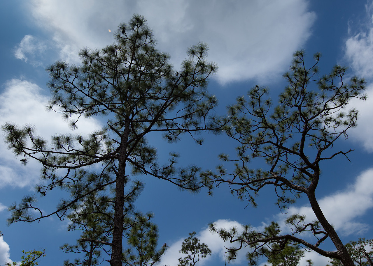 Pine Canopy, Eglin Air Force Base, Florida
