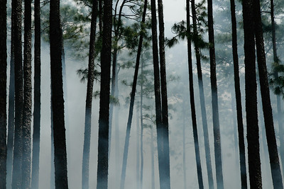 Smoke in the Pines, Camp Whispering Pines. Louisiana