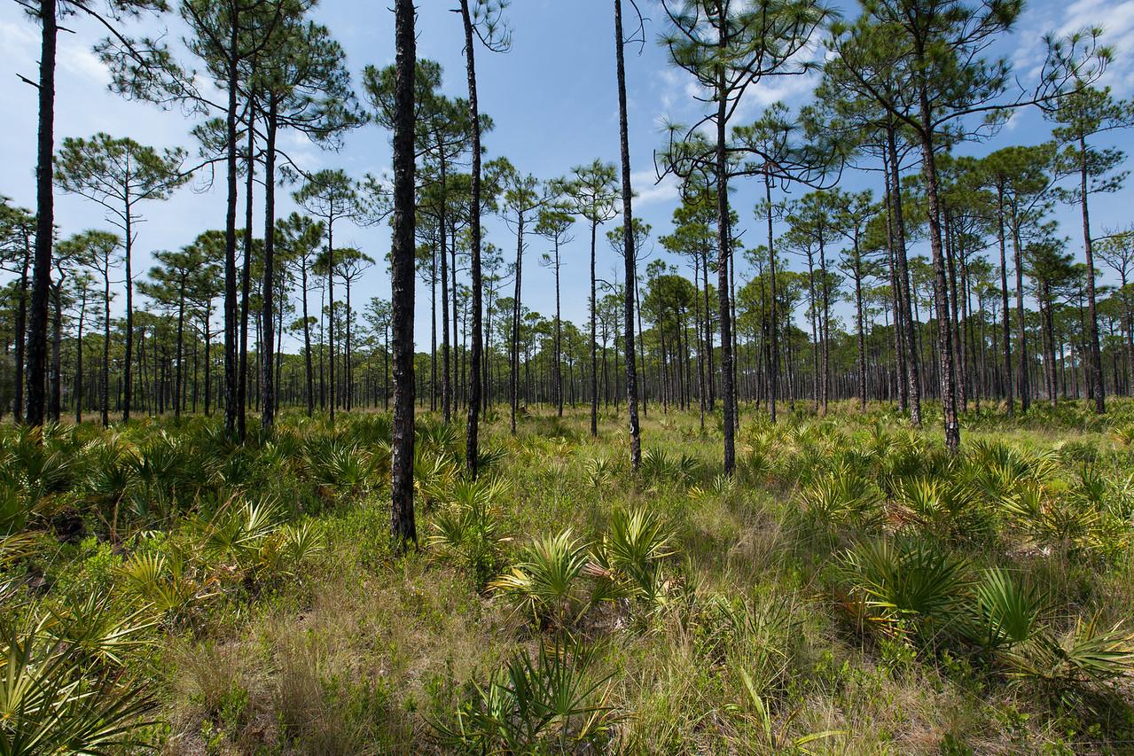 St. Joseph Bay State Buffer Preserve, Florida