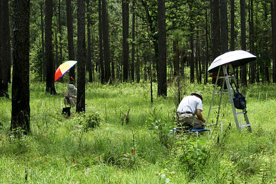 Groundcover Sampling, Camp Whispering Pines, Louisiana
