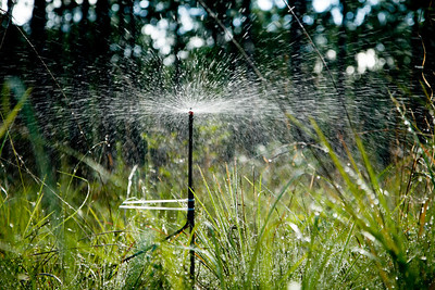 Irrigation Experiment, Camp Whispering Pines, Louisiana